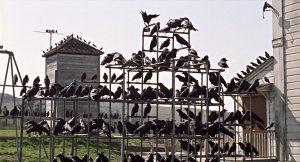 รีวิว หนังเรื่อง The Birds ภาพยนตร์ที่ต้องจดจำ